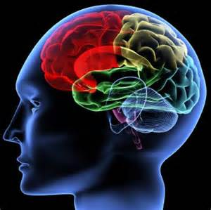 brain 5
